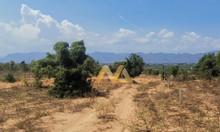 Tại Bình Thuận giá đất rẻ