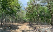 Bán đất trang trại gần Hương Lộ 10, đường Dầu Giây, sông Nhạn, giá tốt