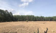 Đất nền Long Phước Winland 1.55 tỷ/nền 100m2 full thổ cư
