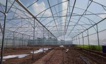 Nhà nhập khẩu và phân phối độc quyền màng nhà kính Israel tại Việt Nam