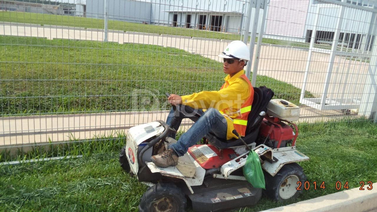 Dịch vụ cắt cỏ trọn gói giá rẻ