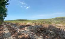 Bán 1000m2 đất Lộc An - Đất Đỏ - Bà Rịa Vũng Tàu