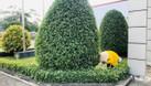Dịch vụ chăm sóc sân vườn giá rẻ (ảnh 3)