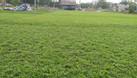 Bán cỏ và trồng cỏ giá rẻ, bảo hành sống (ảnh 4)