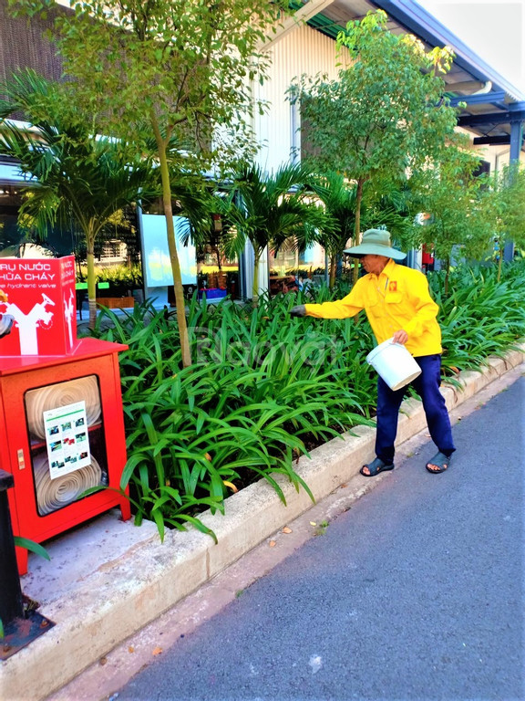 Dịch vụ chăm sóc sân vườn giá rẻ (ảnh 2)