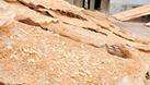 Bánh đa Bắc Giang, bánh đa Thổ Hà, phân phối và cung cấp (ảnh 3)