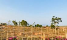 Bán 7949m2 đất trồng cây Bắc Bình chỉ 516,685tr sổ riêng