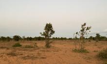 Bán 5760m2 đất trồng cây Bắc Bình sang sổ ngay
