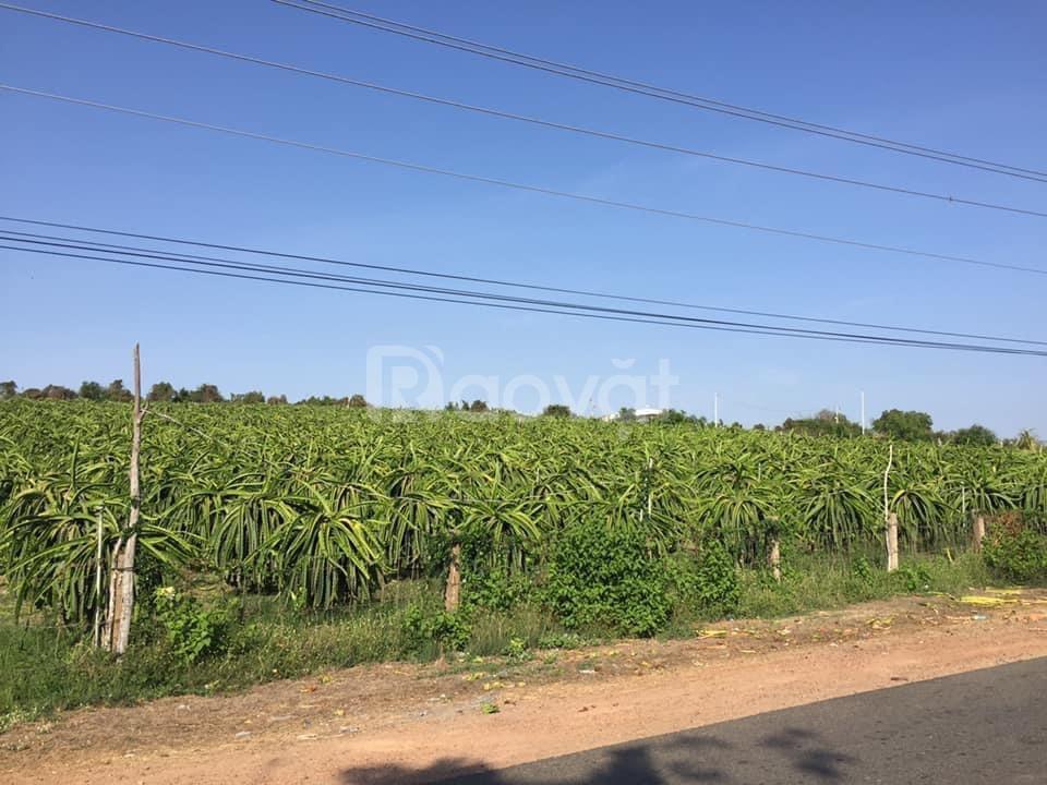Bán 8087m đất trồng cây hồng thái chỉ 525,655tr bao sang sổ 0938677909