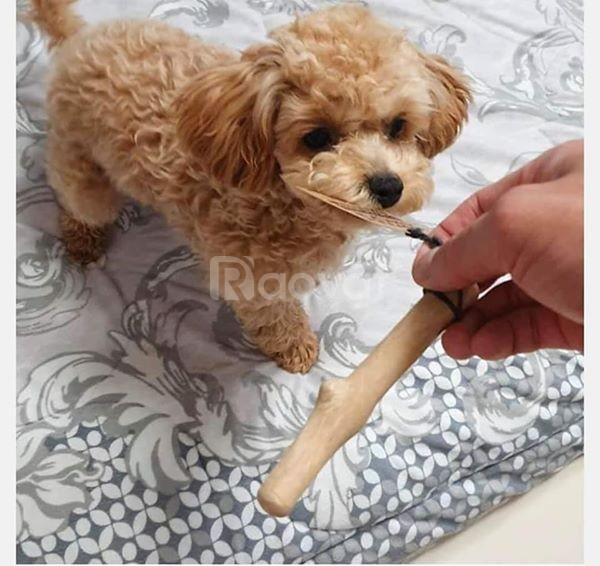 Khúc xương đồ chơi cho chó bằng gỗ