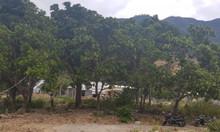 Bán 1650m đất hòn xện Vĩnh Hòa Nha Trang