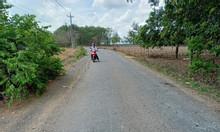Bán đất mặt tiền đường huyện Long Thành, xã Tân Hiệp giá rẻ sập nguồn