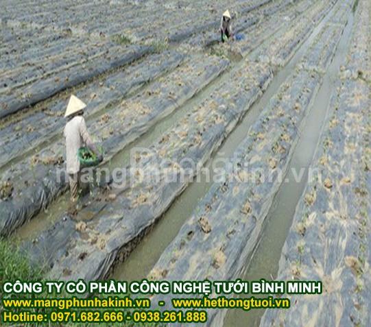 Màng phủ nông nghiệp, đại lý cung cấp màng phủ nông nghiệp