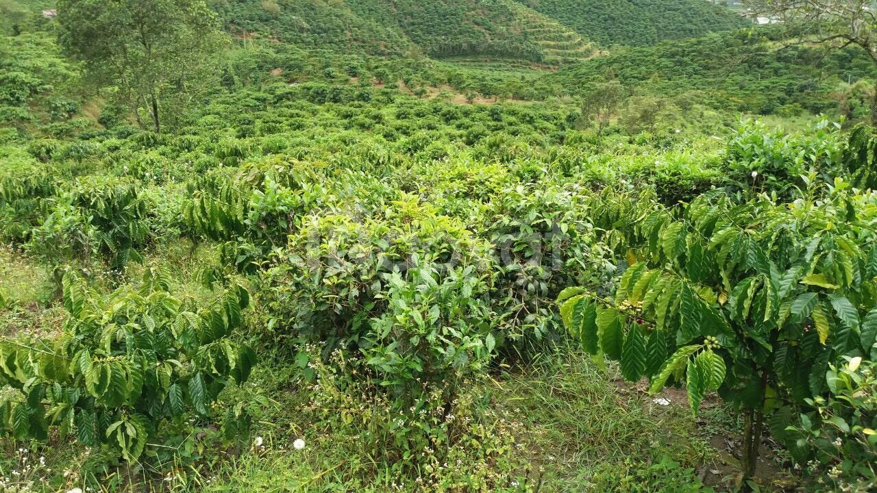 Chính chủ bán đất đẹp xã Lộc Châu, TP Bảo Lộc giá tốt