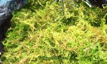 Cung cấp rêu rừng sỉ lẻ