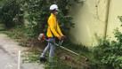 Dịch vụ cắt cỏ, phát hoang cỏ dại giá rẻ (ảnh 5)