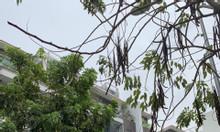 Bán nhà mặt đường 2 ô tô tránh nhau, phố Hạ Đình mặt tiền 5,5m, SĐCC