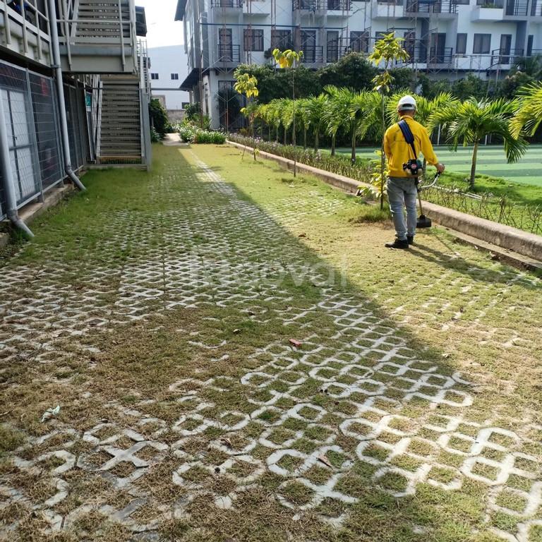 Dịch vụ cắt cỏ, phát hoang cỏ dại giá rẻ (ảnh 1)