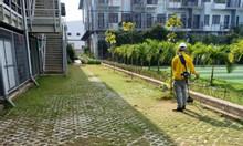 Dịch vụ cắt cỏ, phát hoang cỏ dại giá rẻ