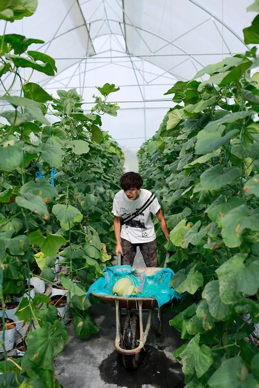 Màng nhà kính nông nghiệp,giá màng nhà kính hà nội,màng nhà kính
