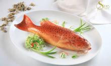 Giá cá mú đỏ 2020 cá mú đỏ sống, đông lạnh