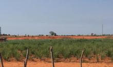 Bán 8652m2 đất nông nghiệp Bình Thuận sổ riêng vuông đẹp