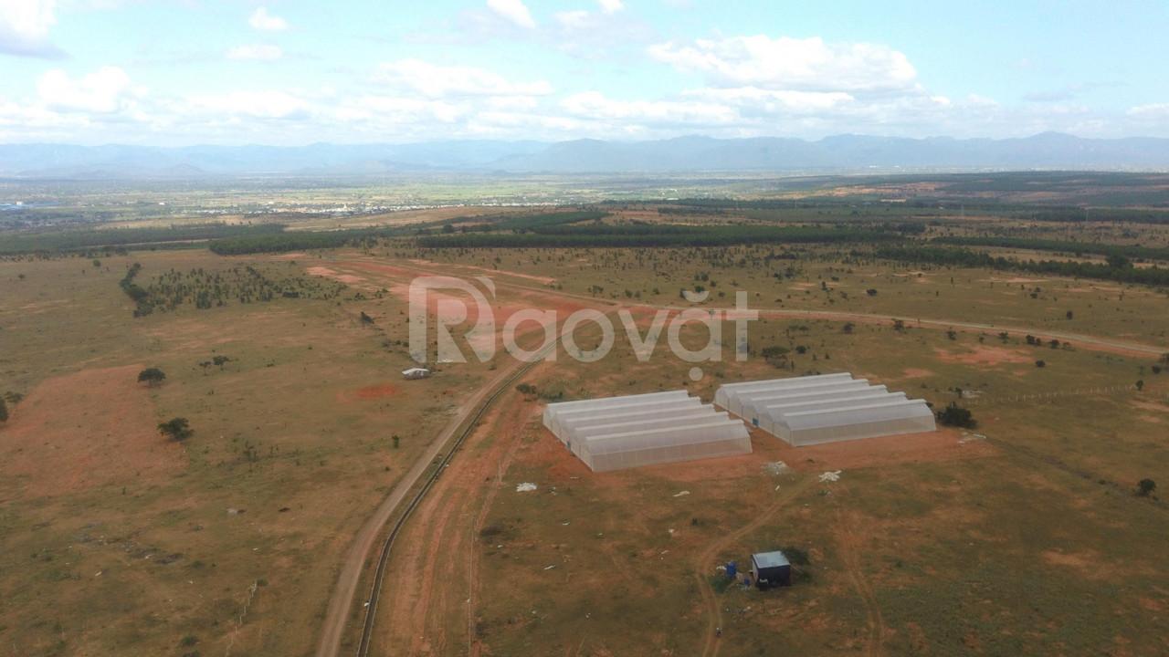 Bán gấp lô đất trồng cây 210tr/3000m2