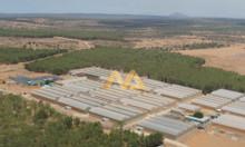 Mua là lời với đất vườn Nam Á Garden giá rẻ chỉ từ 50 nghìn/m2