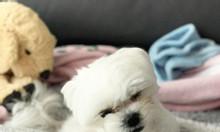 Khúc xương đồ chơi cho chó