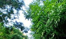 Bán lô đất 2MT xây biệt thự tuyệt đẹp, xã Phước Kiển, Nhà Bè, giá tốt.