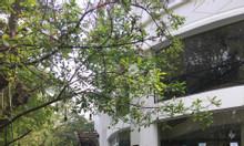 Cần chuyển nhượng nhà phố Marina Thủy Nguyên KĐT Ecopark, 180m2
