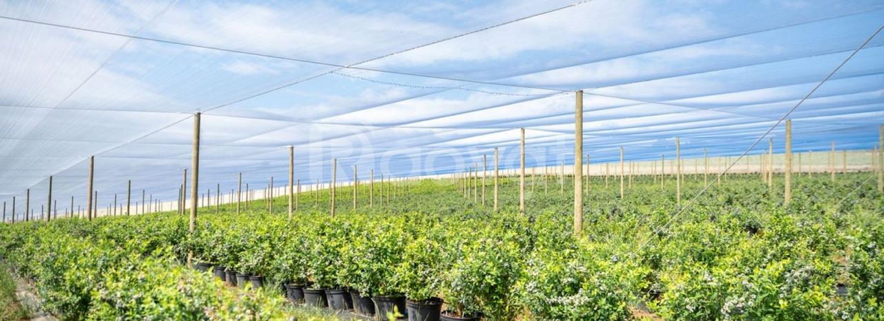 Công ty bán lưới chắn côn trùng, đại lý lưới chắn côn trùng israel