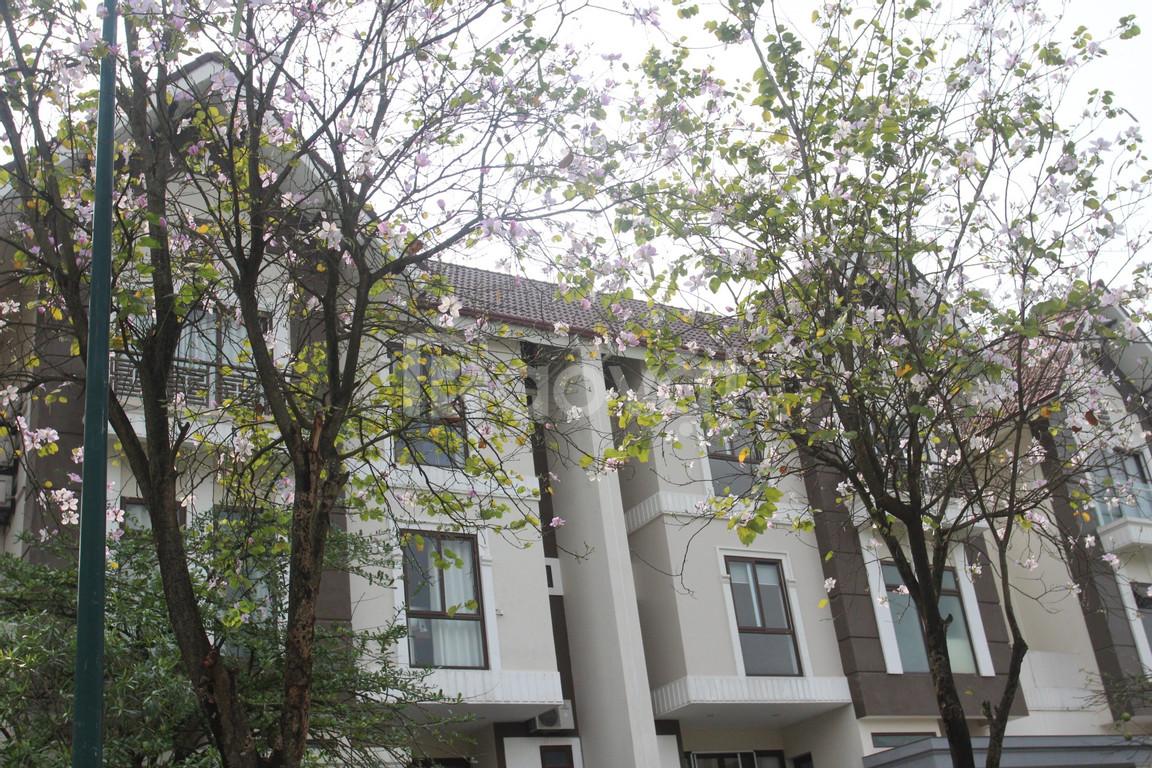 Biệt thự Khu Q Ciputra 468m2, giá 115 triệu/m2