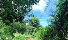 Đồng Nai, khu Định Quán, tổng diện tích 1,981m2, có 300m2 xin thổ cư