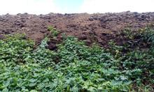 Cung cấp phân bò ủ, Bến Lức, Long An