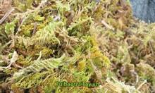 Cung cấp rêu rừng giá rẻ toàn quốc