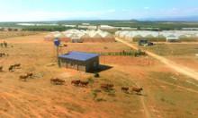 Bán đất Sông Lũy làm trang trại nuôi giông, nuôi yến 1.2ha
