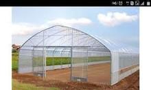 Màng phủ nhà kính Politiv Israel , nhà kính trồng rau