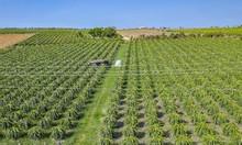 Đất nông nghiệp đầu tư giá rẻ chính chủ tôi bán 13934m2