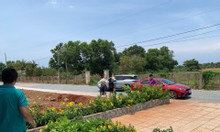 Bán đất Hồ Tràm đường 12m, sổ đỏ, thổ cư, giá 300 triệu/ m ngang