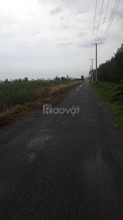 Bán đất sào xã Bàu Cạn, huyện Long Thành, tỉnh Đồng Nai