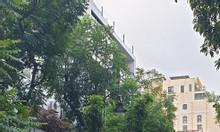 Nhà mặt phố Bà Triệu MT 5,1m vỉa hè rộng KD sầm uất