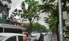 Tôi cần bán nhà mặt phố Huế, HBT, Hà Nội, DT 150m2x5T