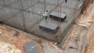 Cốt pha phủ phim, ván ép cốt pha xây dựng (ảnh 3)
