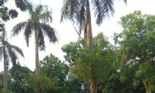 Cần chuyển nhượng nhà phố Marina Ecopark, 180m2  kinh doanh tốt