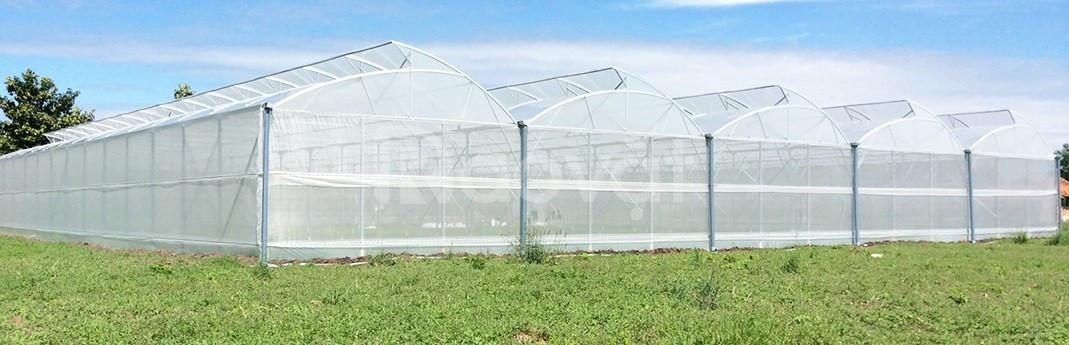 Công nghệ trồng rau của Politiv israel tại Hà Tĩnh