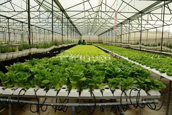 Cung cấp vật tư nhà kính Politiv, các loại màng phủ nông nghiệp