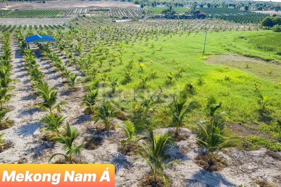 Đất vườn đón đầu cao tốc Phan Thiết 10000m2 giá chỉ 500 triệu
