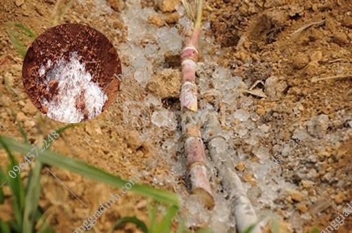 Chất giữ ẩm cho đất tiết kiệm nước tưới cho cây trồng trên mái