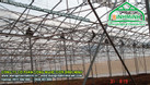 Công nghệ trồng rau của Politiv israel tại hải dương (ảnh 4)